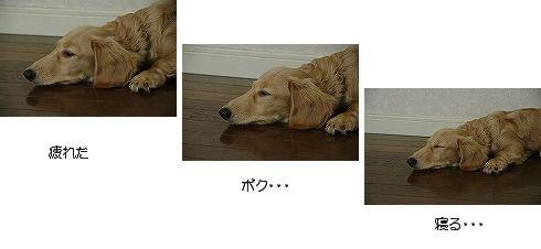 c0093830_15325.jpg