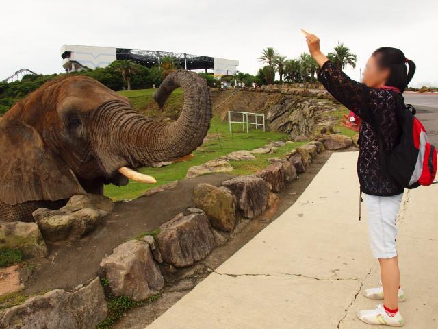 あなた の 番 です ゾウ キリン