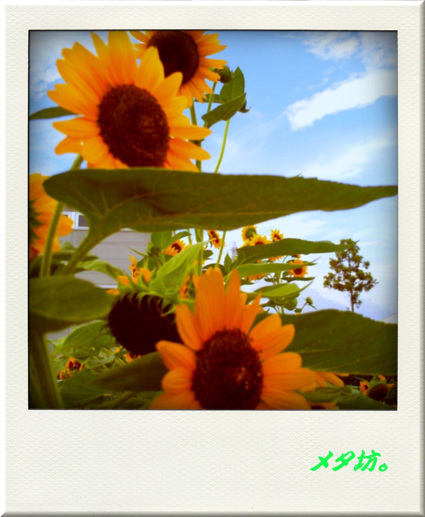 f0164373_1941299.jpg