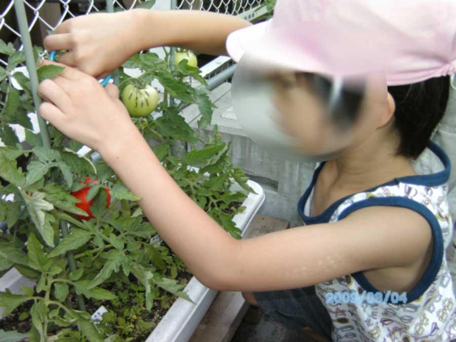 屋上の農園の収穫_f0165190_1873774.jpg