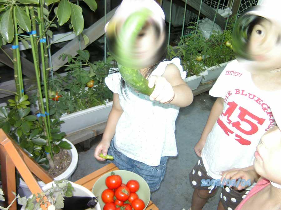 屋上の農園の収穫_f0165190_1881559.jpg