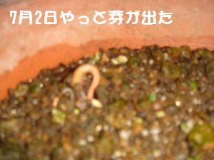 b0101991_9331951.jpg
