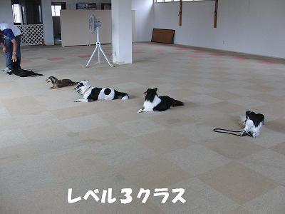 f0186040_20144354.jpg