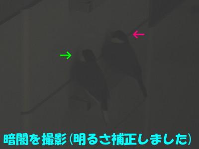 b0158061_20461078.jpg