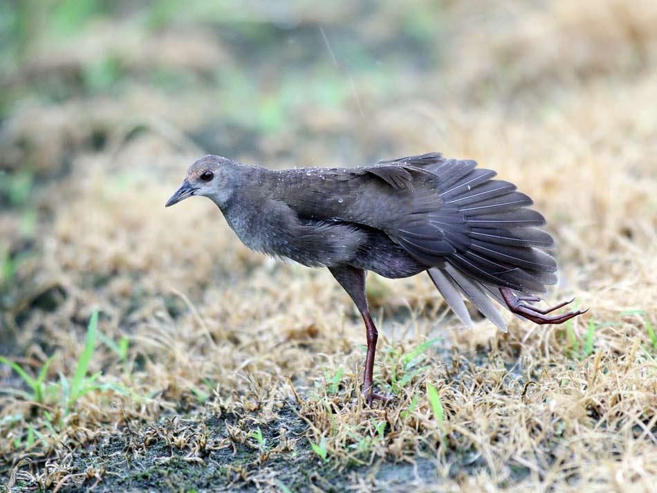 宮仕えは天気に合わせて鳥見は出来ない_e0143879_17304625.jpg