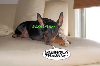 c0195787_1843384.jpg