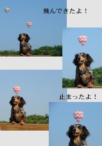 f0195891_1836331.jpg