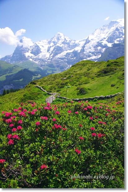 スイス・花の谷のハイキング_f0179404_20191371.jpg