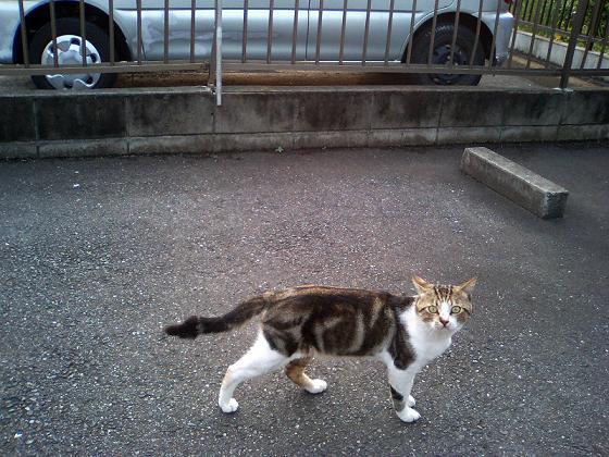 猫のいる風景 #4_f0155808_23502496.jpg