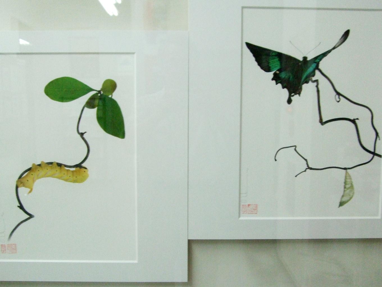 1063) af 「ステファン・エッテ写真展 『蝶の夢』」 終了・7月7日(火)~8月8日(土) _f0126829_1329290.jpg