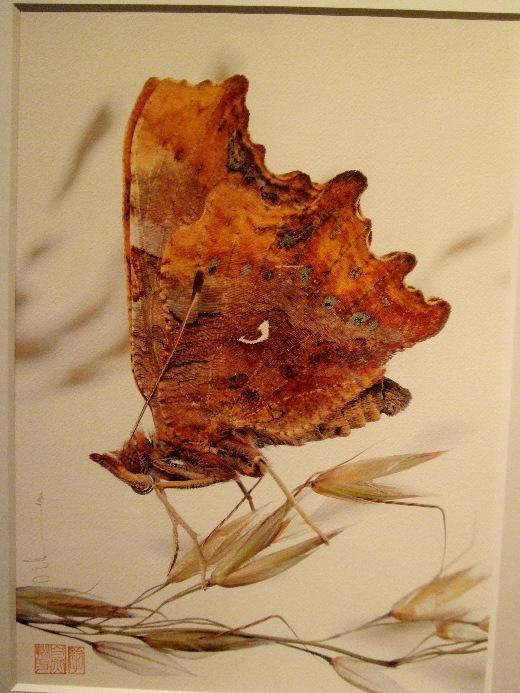 1063) af 「ステファン・エッテ写真展 『蝶の夢』」 終了・7月7日(火)~8月8日(土) _f0126829_13314721.jpg