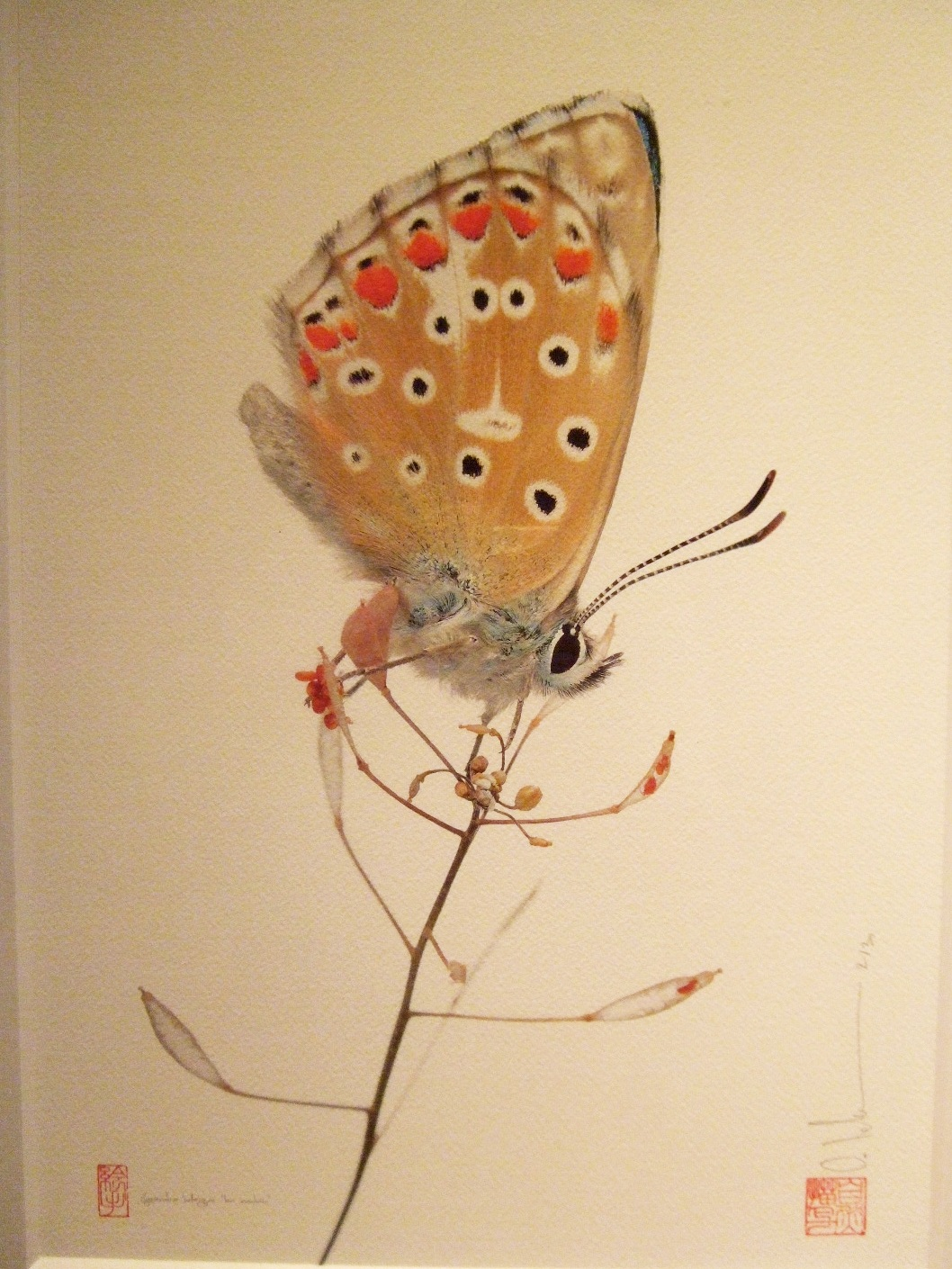 1063) af 「ステファン・エッテ写真展 『蝶の夢』」 終了・7月7日(火)~8月8日(土) _f0126829_13335778.jpg