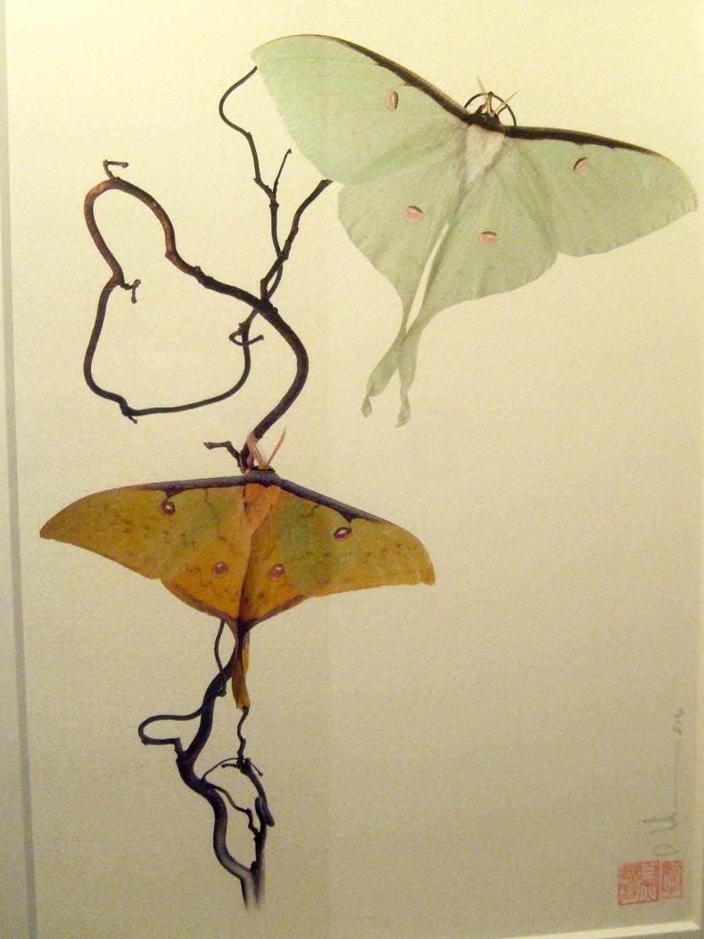 1063) af 「ステファン・エッテ写真展 『蝶の夢』」 終了・7月7日(火)~8月8日(土) _f0126829_13391232.jpg