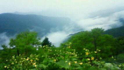 徳島県は昨日から記録的な豪雨です。_c0089831_992777.jpg