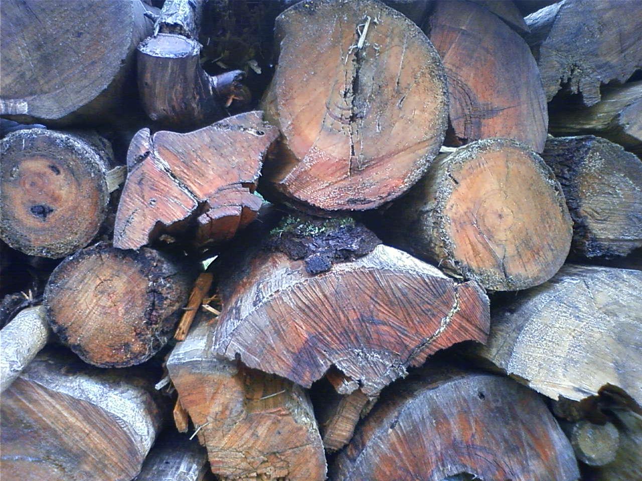 薪 Firewood_e0155231_16223185.jpg