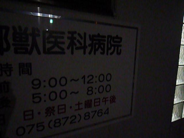 深夜の動物病院。_f0181251_1156554.jpg