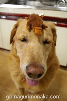 パブロフの犬_a0064067_1365437.jpg