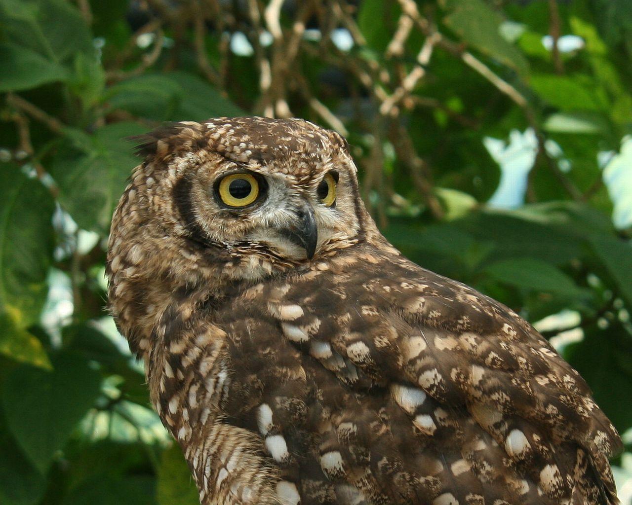 神戸花鳥園の鳥_f0105570_10124256.jpg
