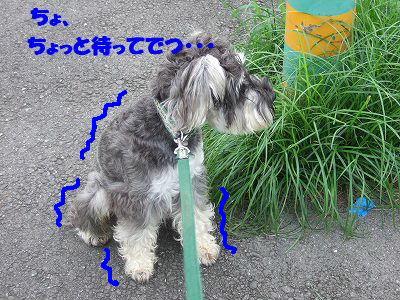 b0143879_1433710.jpg