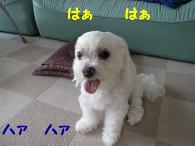 f0145192_1552496.jpg