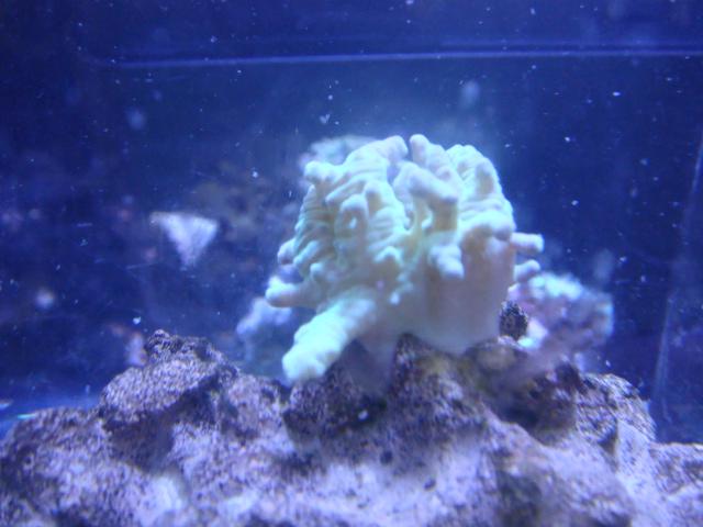 海水魚・サンゴ・水草・日本産淡水魚_f0189122_1147755.jpg