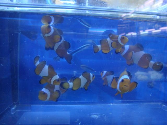 海水魚・サンゴ・水草・日本産淡水魚_f0189122_1382871.jpg