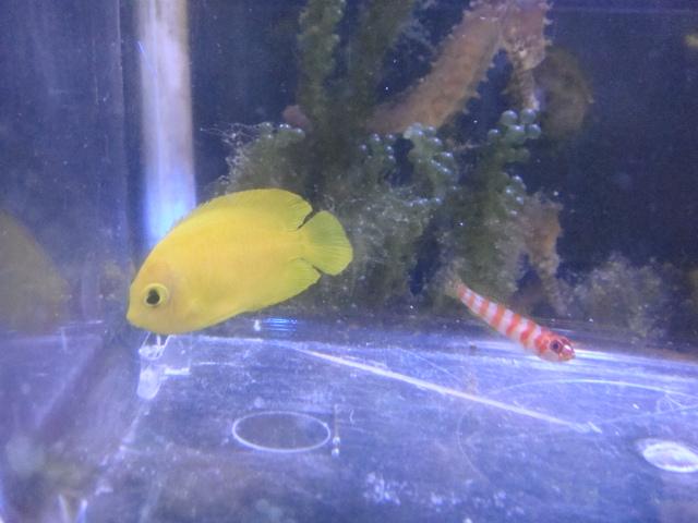 海水魚・サンゴ・水草・日本産淡水魚_f0189122_1384598.jpg