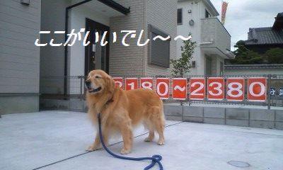 b0127531_14504652.jpg