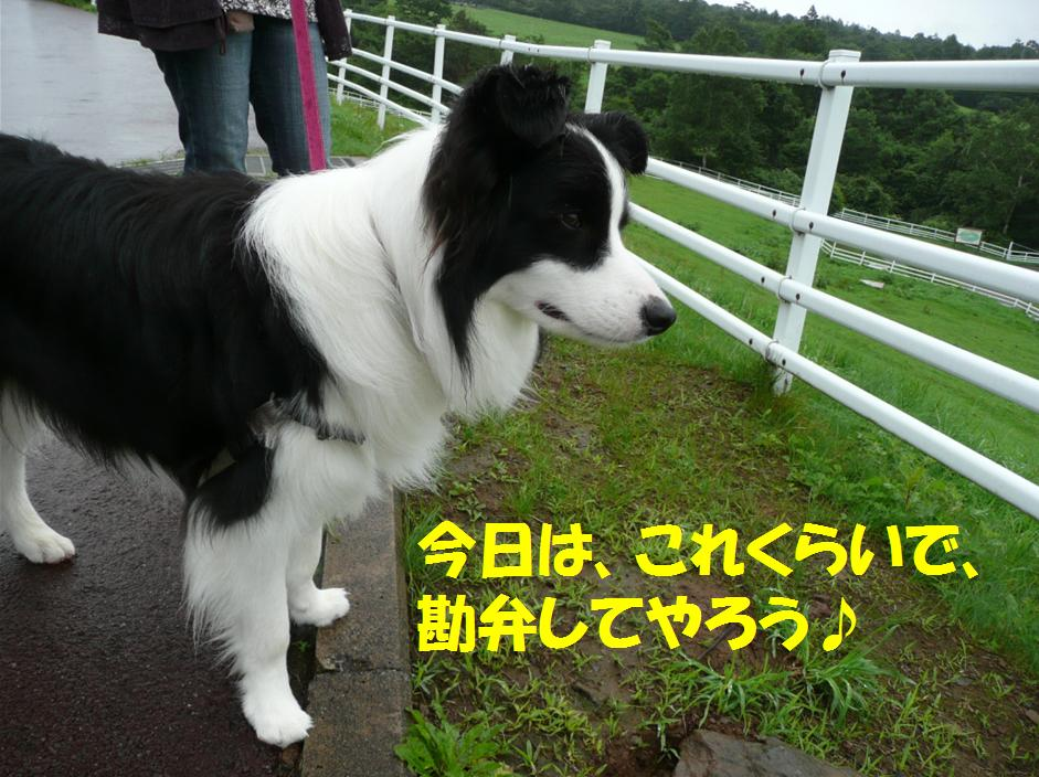 c0147241_22153861.jpg