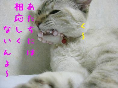 b0151748_1302147.jpg