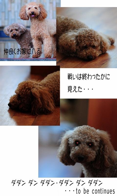b0187161_18302167.jpg