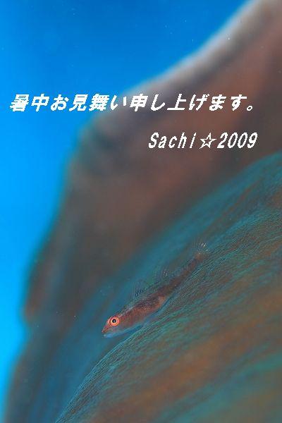 f0179961_21451788.jpg