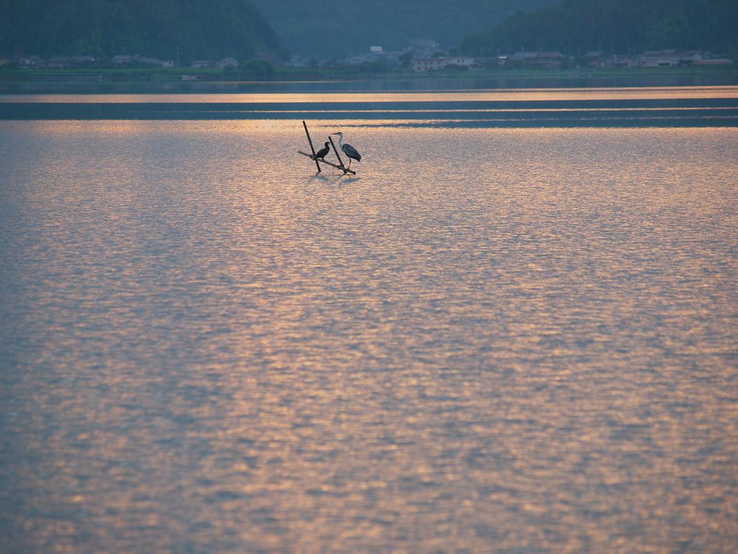 琵琶湖で オフ会 西湖  1_f0021869_16391950.jpg