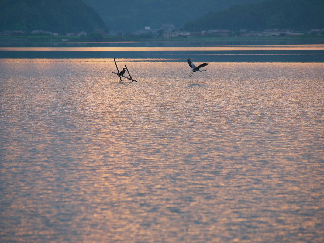 琵琶湖で オフ会 西湖  1_f0021869_16403172.jpg