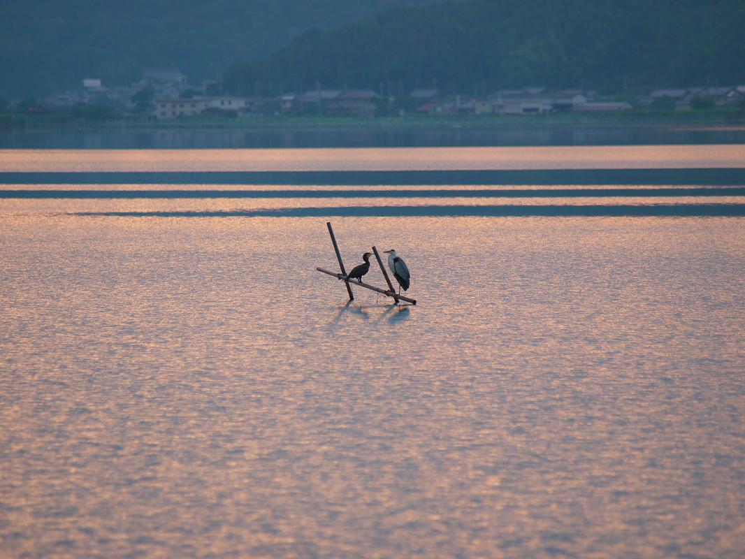 琵琶湖で オフ会 西湖  1_f0021869_16452262.jpg