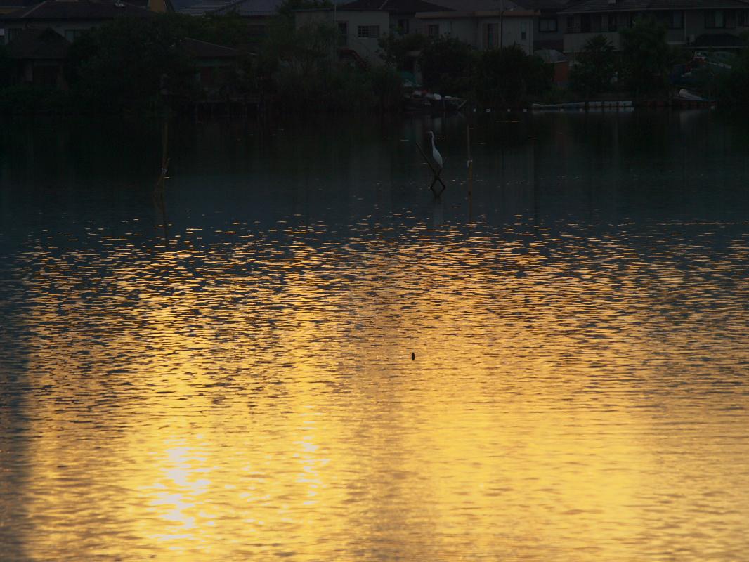 琵琶湖で オフ会 西湖  2_f0021869_2252148.jpg