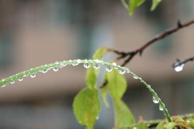雨のしずく_b0151490_2394127.jpg