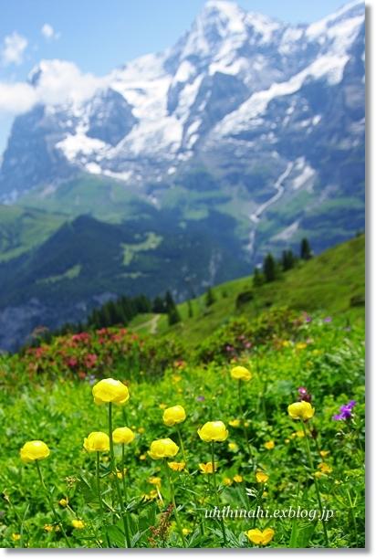 スイスアルプスのお花たち_f0179404_2059230.jpg