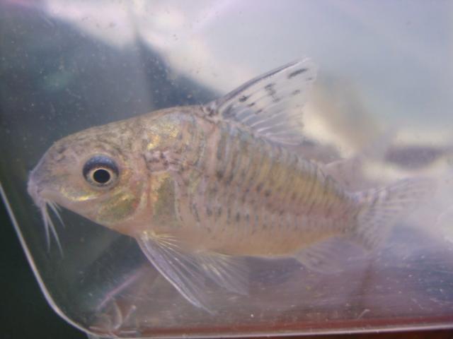 熱帯魚・金魚・水草_f0189122_1318236.jpg