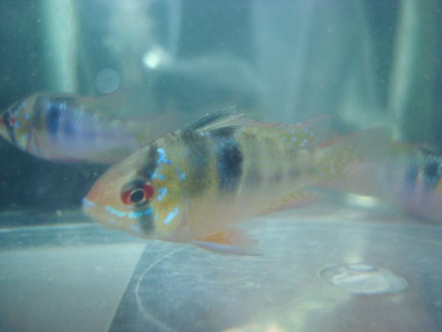 熱帯魚・金魚・水草_f0189122_13195430.jpg