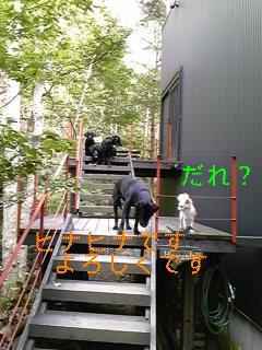 夏休み_f0148927_177189.jpg