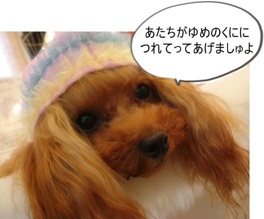 LOVERUPY新作のお知らせ_b0084929_1627580.jpg