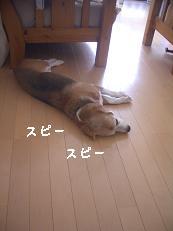 b0098660_1250146.jpg