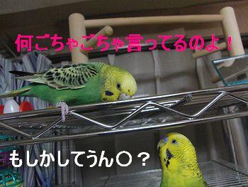f0196665_0503659.jpg