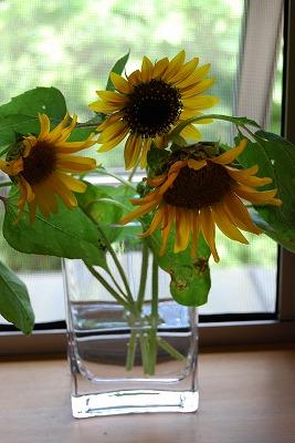 盛夏に咲く花…そして つる植物_c0124100_1811527.jpg