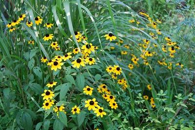 盛夏に咲く花…そして つる植物_c0124100_1816125.jpg
