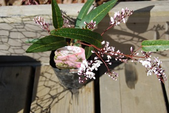 盛夏に咲く花…そして つる植物_c0124100_18454019.jpg