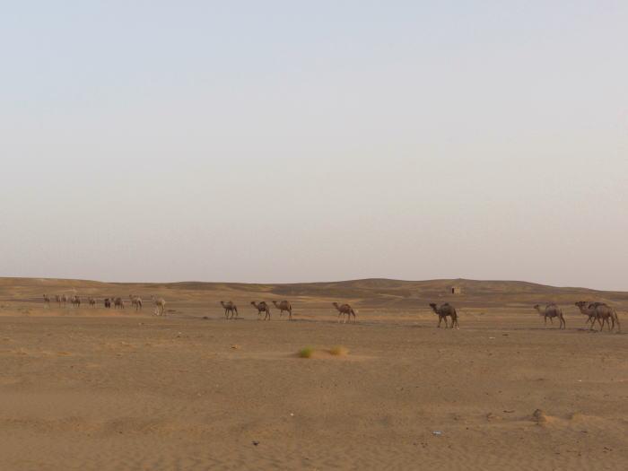 モロッコ3 砂漠でラクダ_a0042928_125394.jpg
