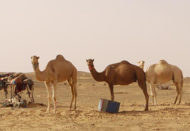 モロッコ3 砂漠でラクダ_a0042928_13395.jpg