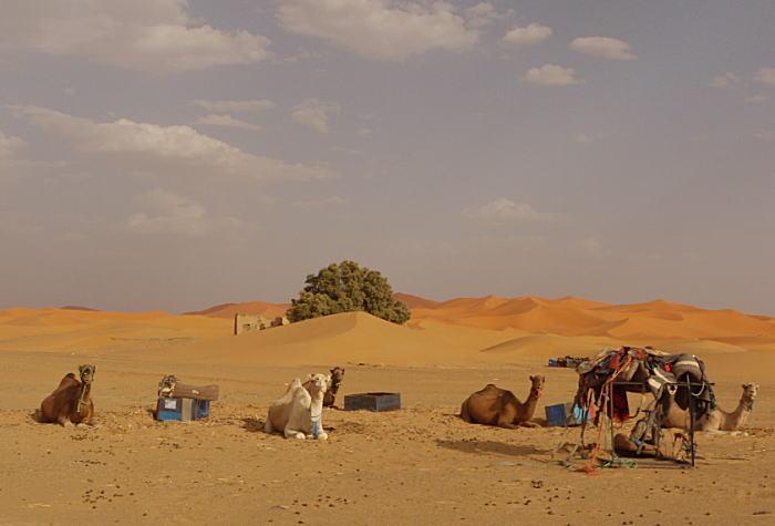 モロッコ3 砂漠でラクダ_a0042928_135351.jpg